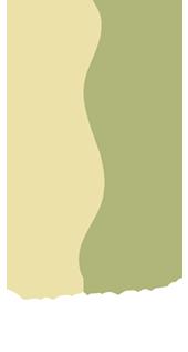 Dolores Park Chiropractic logo